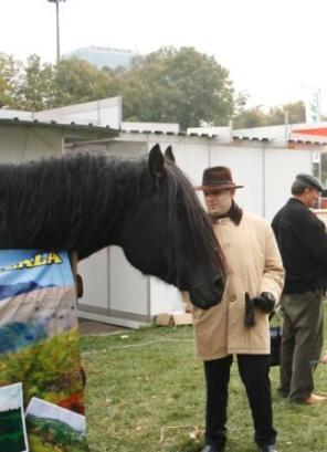 president-anton-caragea-at-romexpo-2016-seeing-horses
